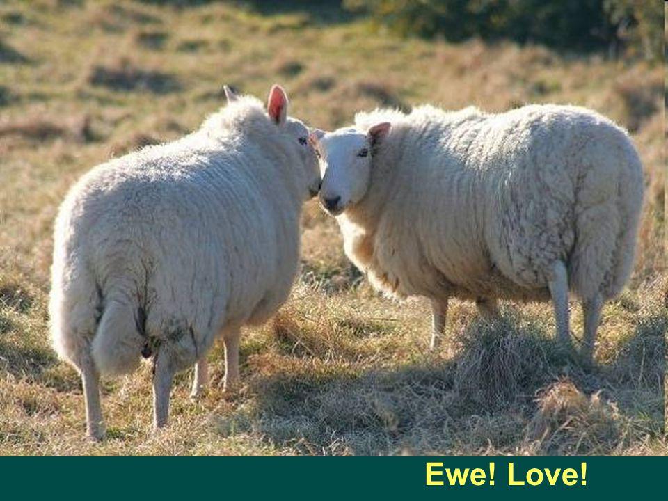 Ewe! Love!