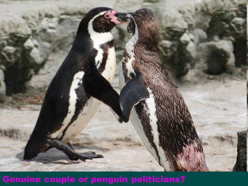 Genuine couple or penguin politicians