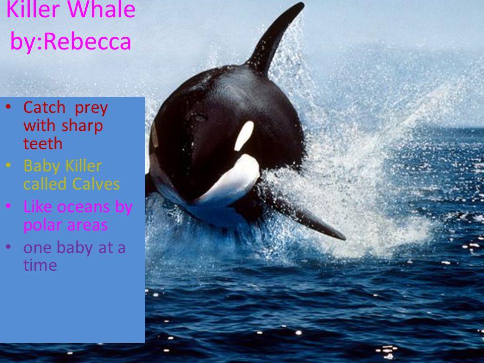 Killer Whale by:Rebecca