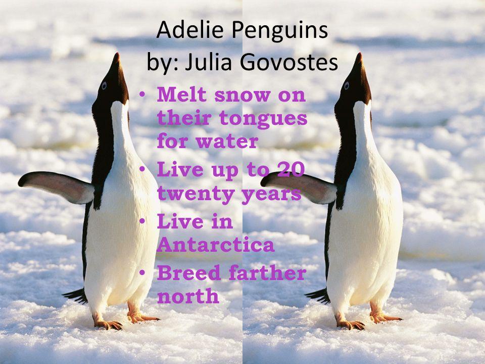 Adelie Penguins by: Julia Govostes