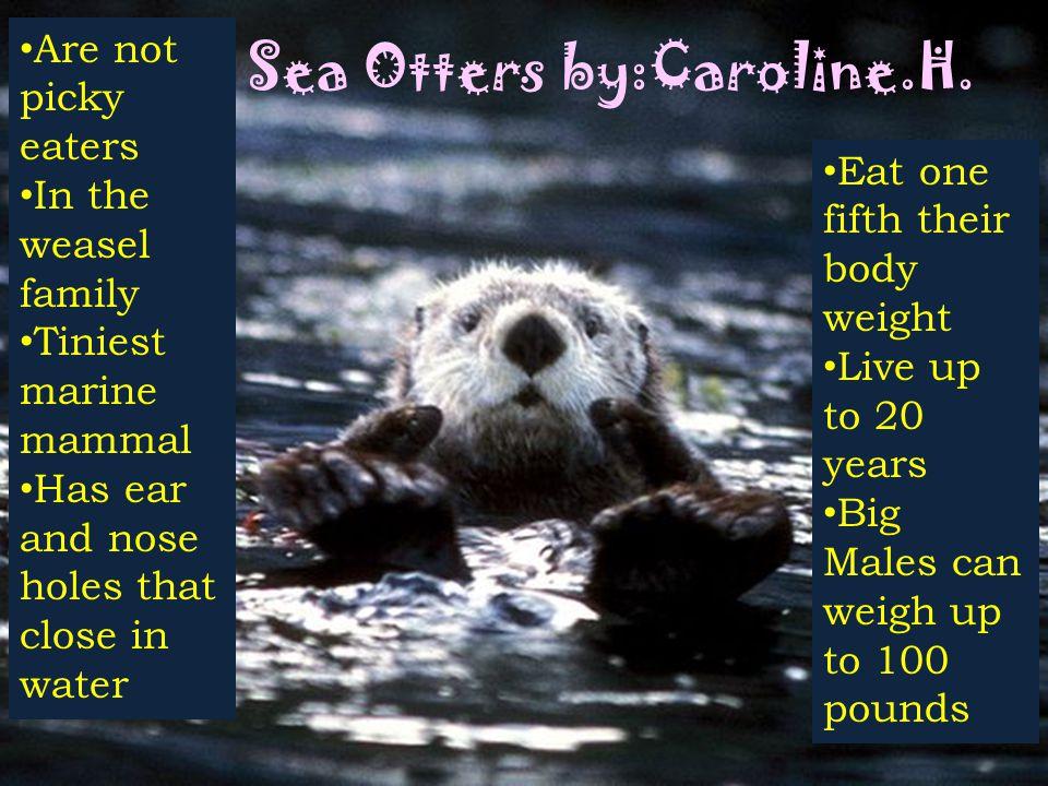 Sea Otters by:Caroline.H.
