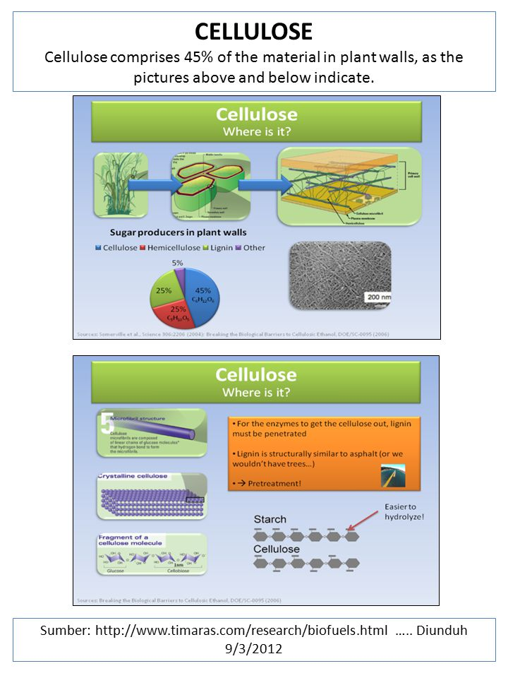 CELLULOSE Cellulose comprises 45% of the material in plant walls, as the pictures above and below indicate.