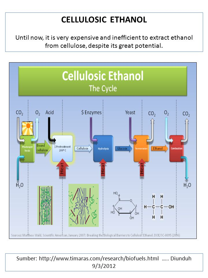 CELLULOSIC ETHANOL Until now, it is very expensive and inefficient to extract ethanol from cellulose, despite its great potential.