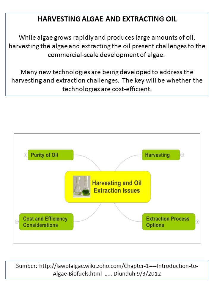 HARVESTING ALGAE AND EXTRACTING OIL
