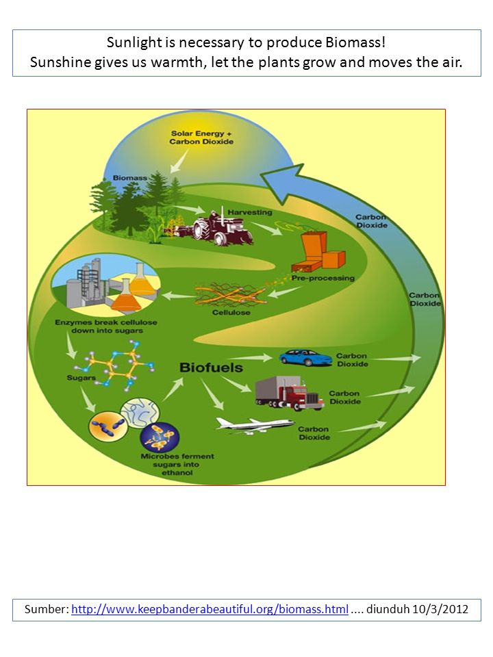 Sunlight is necessary to produce Biomass