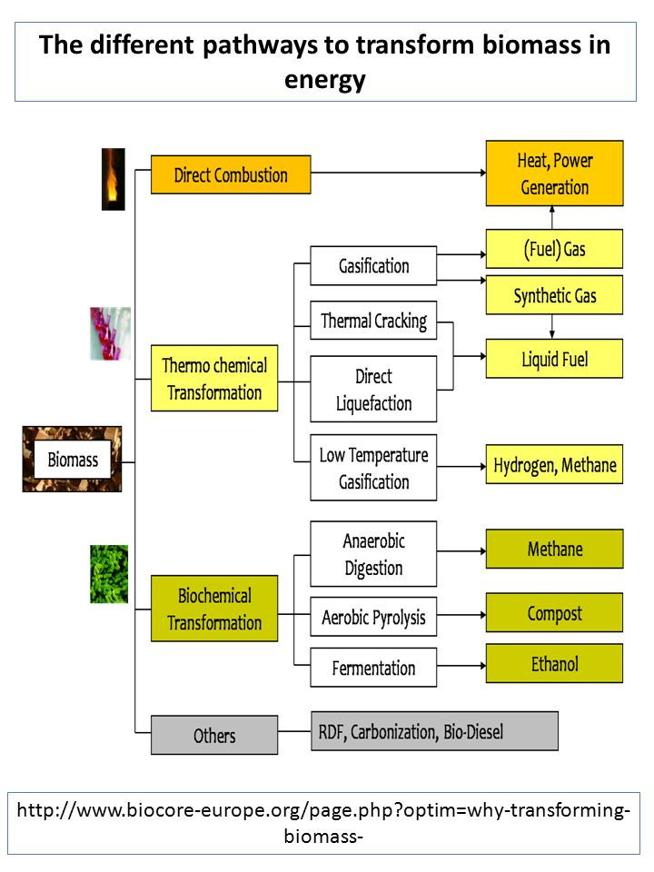 The different pathways to transform biomass in energy
