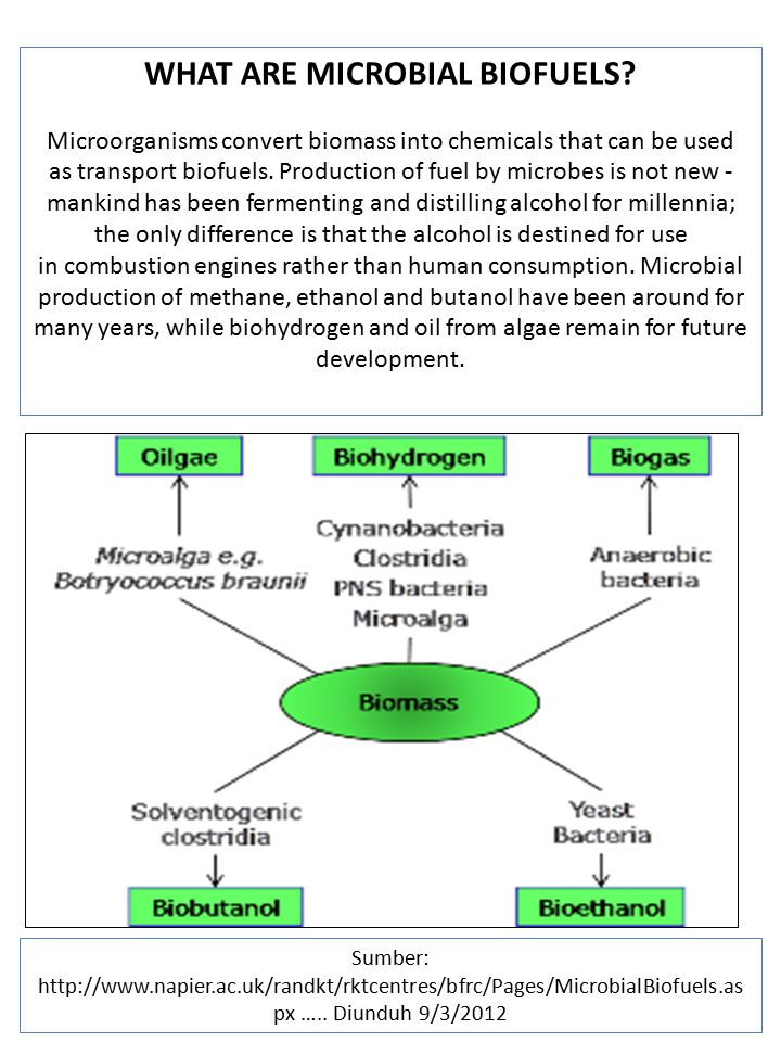 WHAT ARE MICROBIAL BIOFUELS