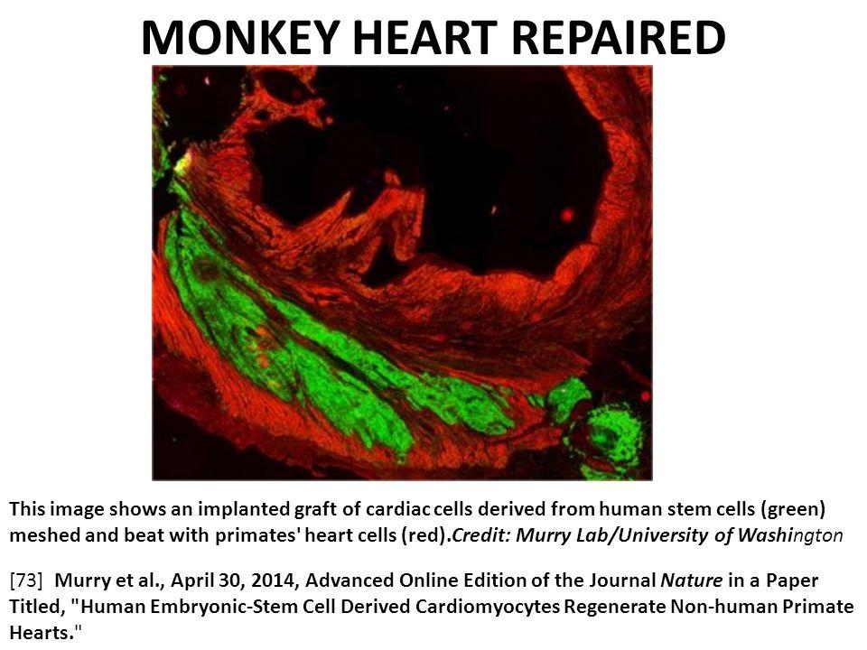 MONKEY HEART REPAIRED
