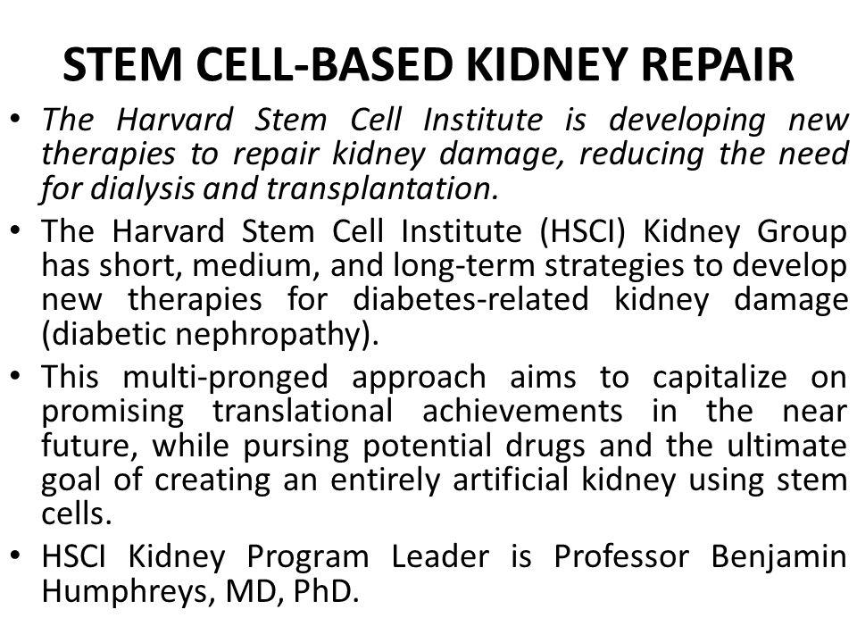 STEM CELL-BASED KIDNEY REPAIR