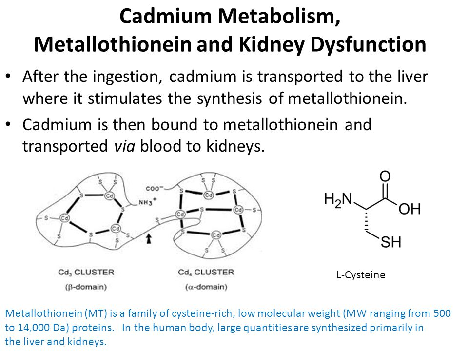 Cadmium Metabolism, Metallothionein and Kidney Dysfunction