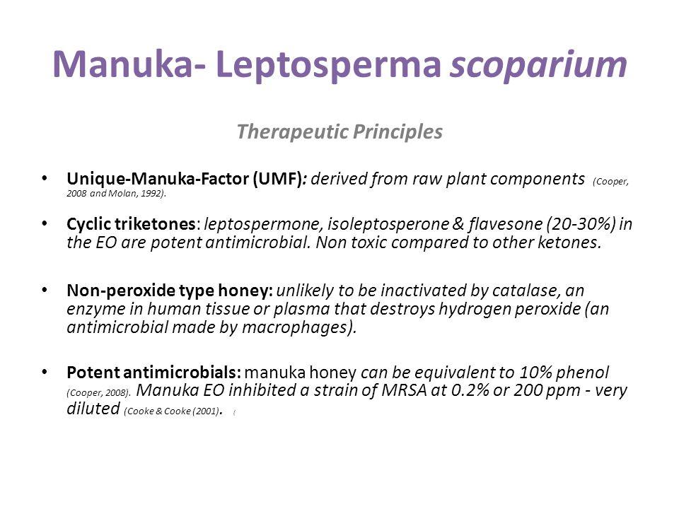 Manuka- Leptosperma scoparium