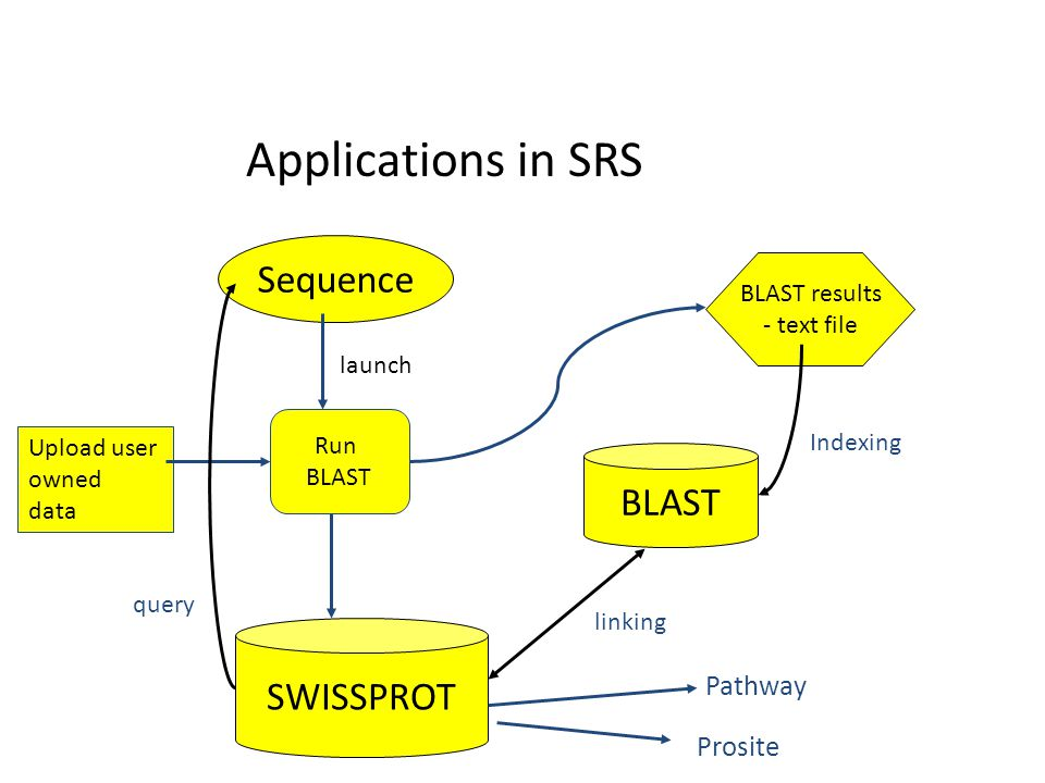 Applications in SRS Sequence BLAST SWISSPROT Pathway Prosite