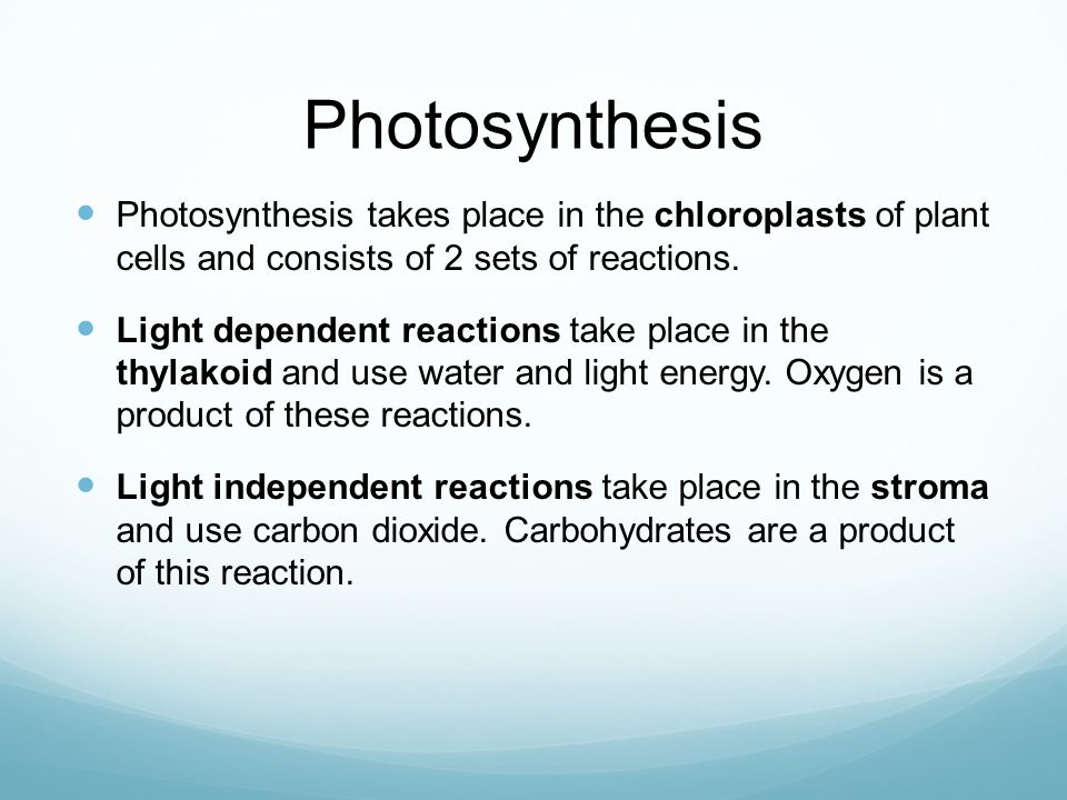 Photosynthesis Photosynthesis takes place in the chloroplasts of plant cells and consists of 2 sets of reactions.