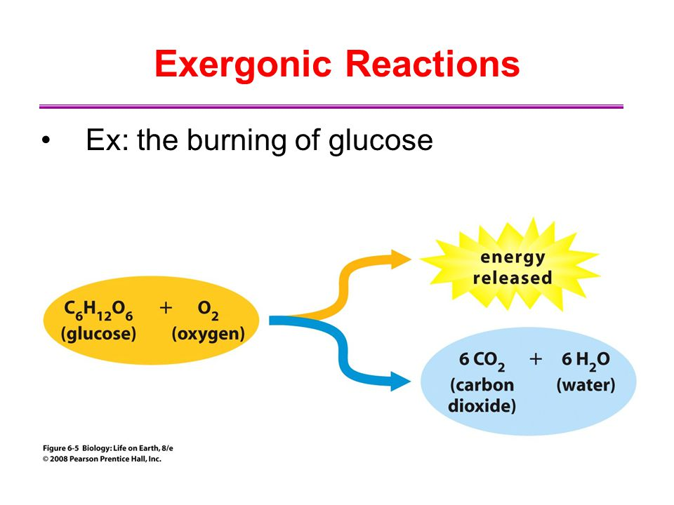 Exergonic Reactions Ex: the burning of glucose
