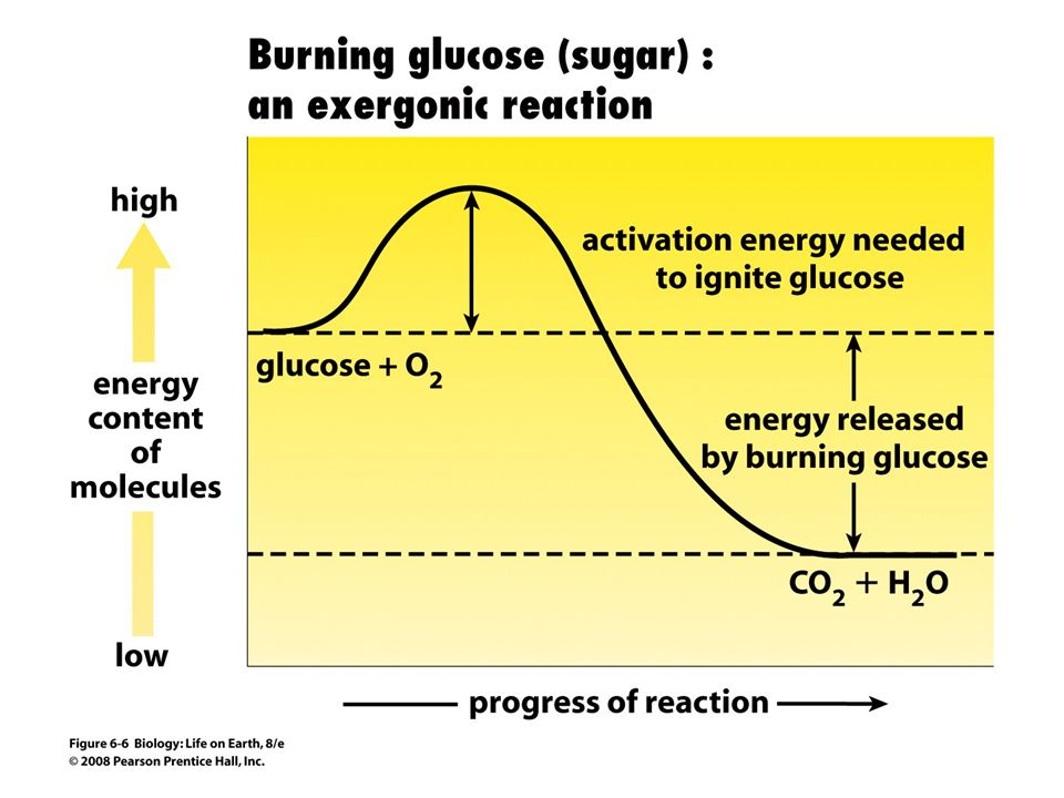 FIGURE 6-6 Energy relations in exergonic reactions