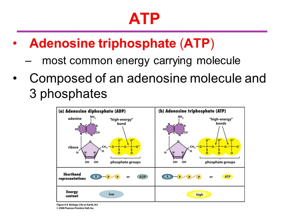 ATP Adenosine triphosphate (ATP)