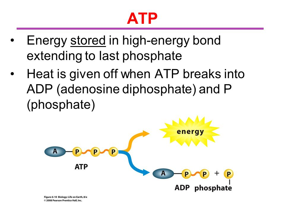 ATP Energy stored in high-energy bond extending to last phosphate