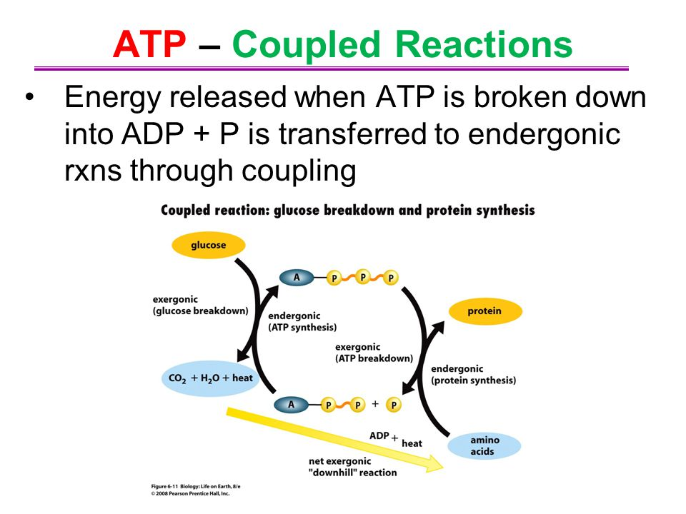 ATP – Coupled Reactions