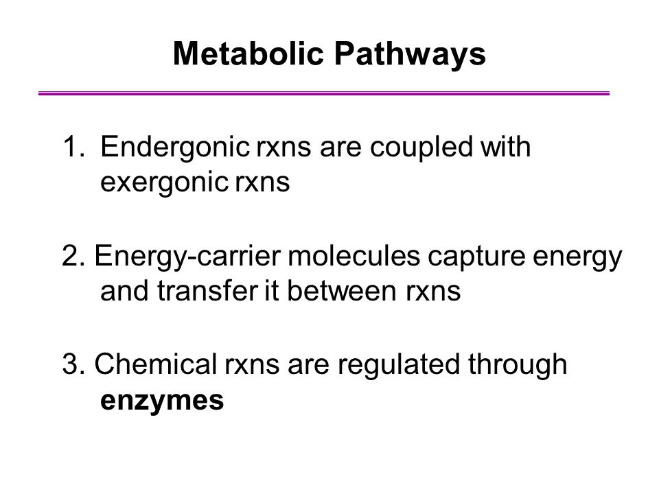 Metabolic Pathways Endergonic rxns are coupled with exergonic rxns