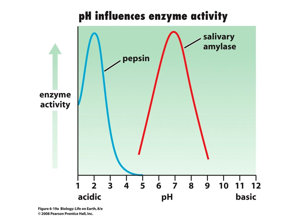 FIGURE 6-19a Enzymes function best within narrow ranges of pH and temperature.
