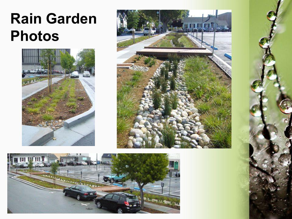 Rain Garden Photos