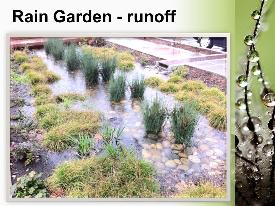Rain Garden - runoff