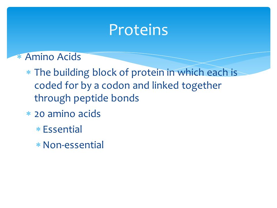 Proteins Amino Acids. The building block of protein in which each is coded for by a codon and linked together through peptide bonds.
