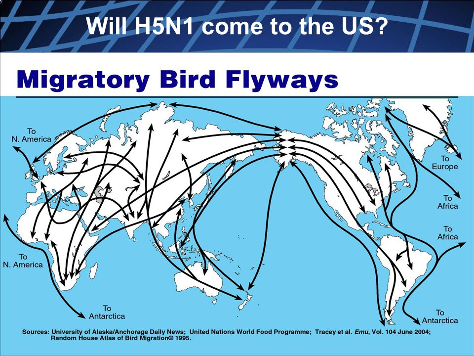 Will H5N1 come to the US Copyright, Dr. V Covello, Center for Change/Risk Communication