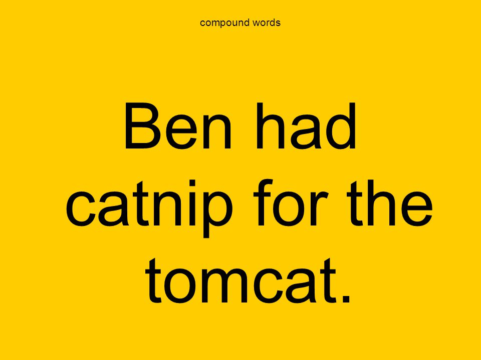 Ben had catnip for the tomcat.