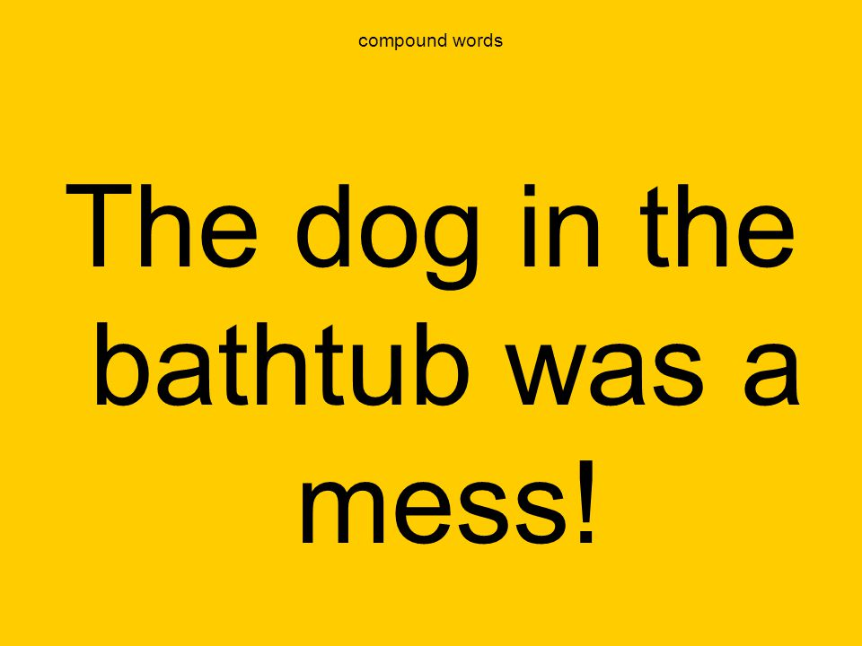 The dog in the bathtub was a mess!