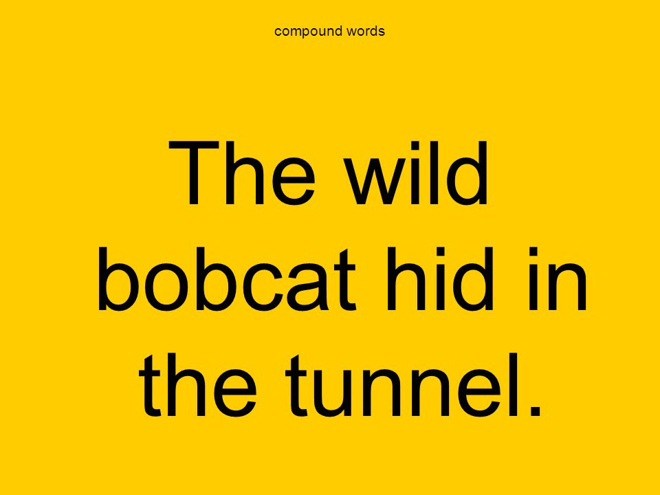 The wild bobcat hid in the tunnel.