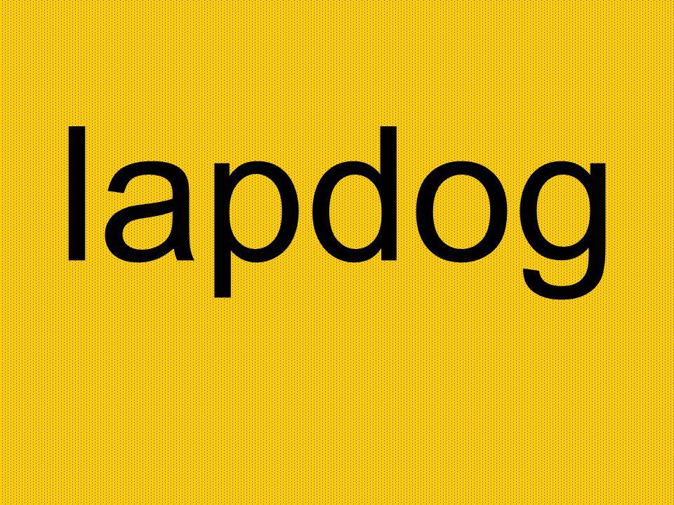 lapdog