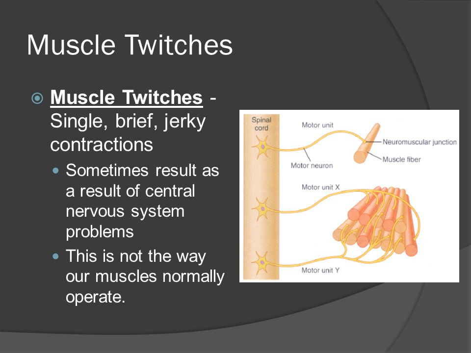 Muscle Twitches Muscle Twitches - Single, brief, jerky contractions