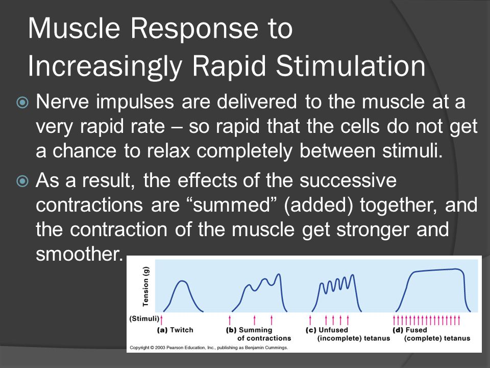 Muscle Response to Increasingly Rapid Stimulation