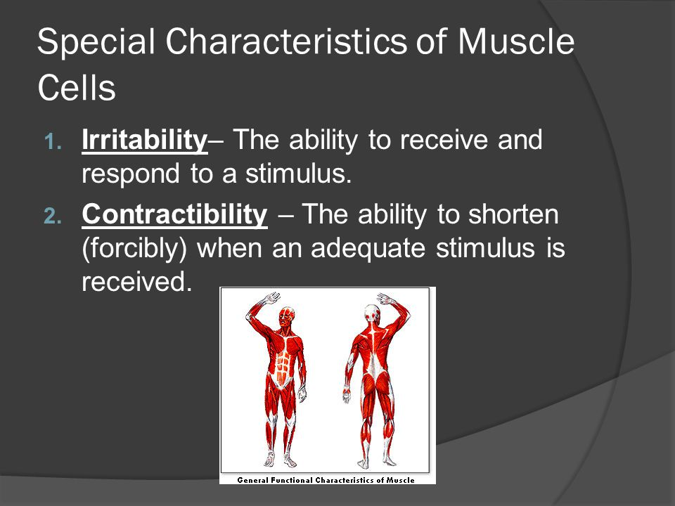 Special Characteristics of Muscle Cells