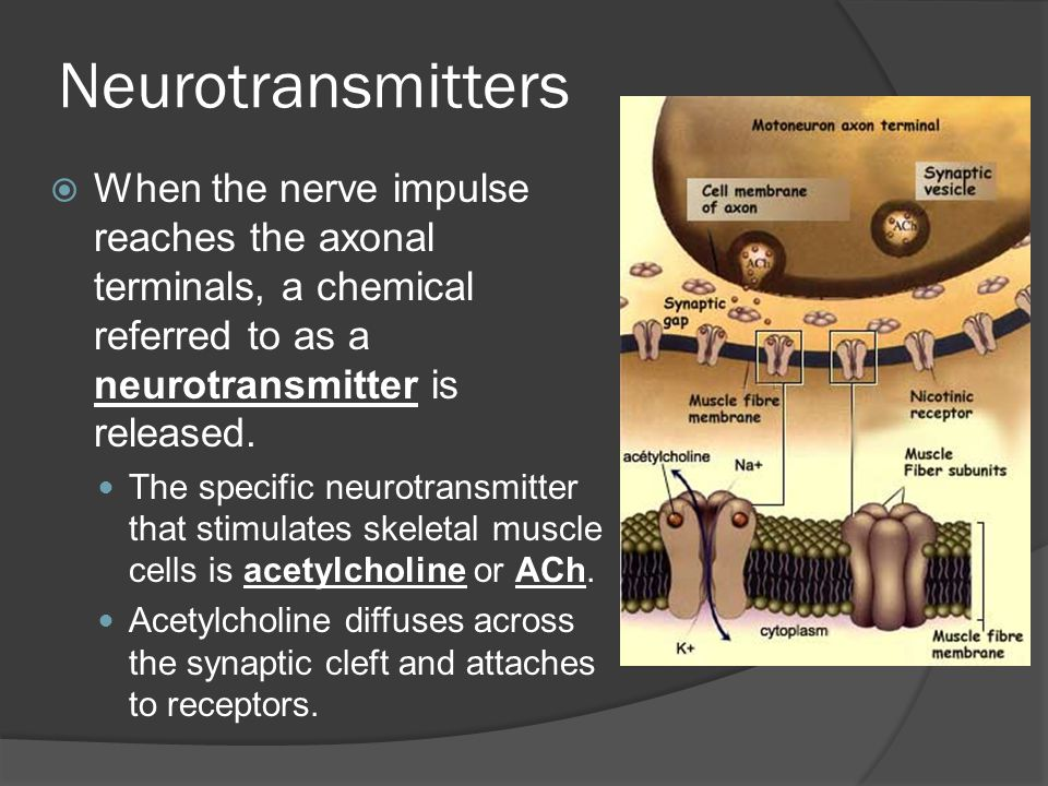 Neurotransmitters When the nerve impulse reaches the axonal terminals, a chemical referred to as a neurotransmitter is released.