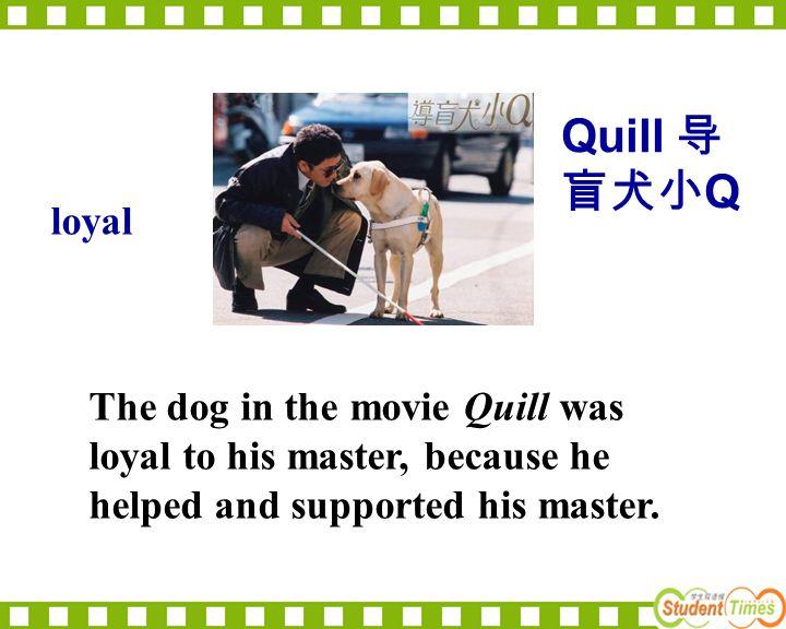 Quill 导盲犬小Q loyal.
