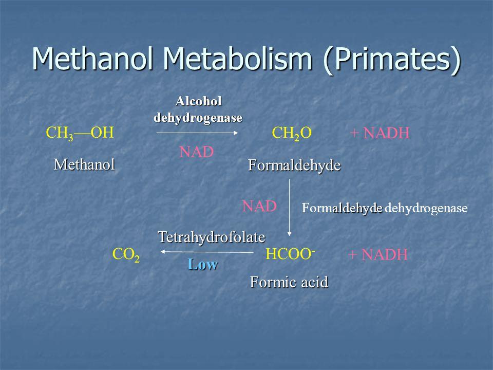 Methanol Metabolism (Primates)