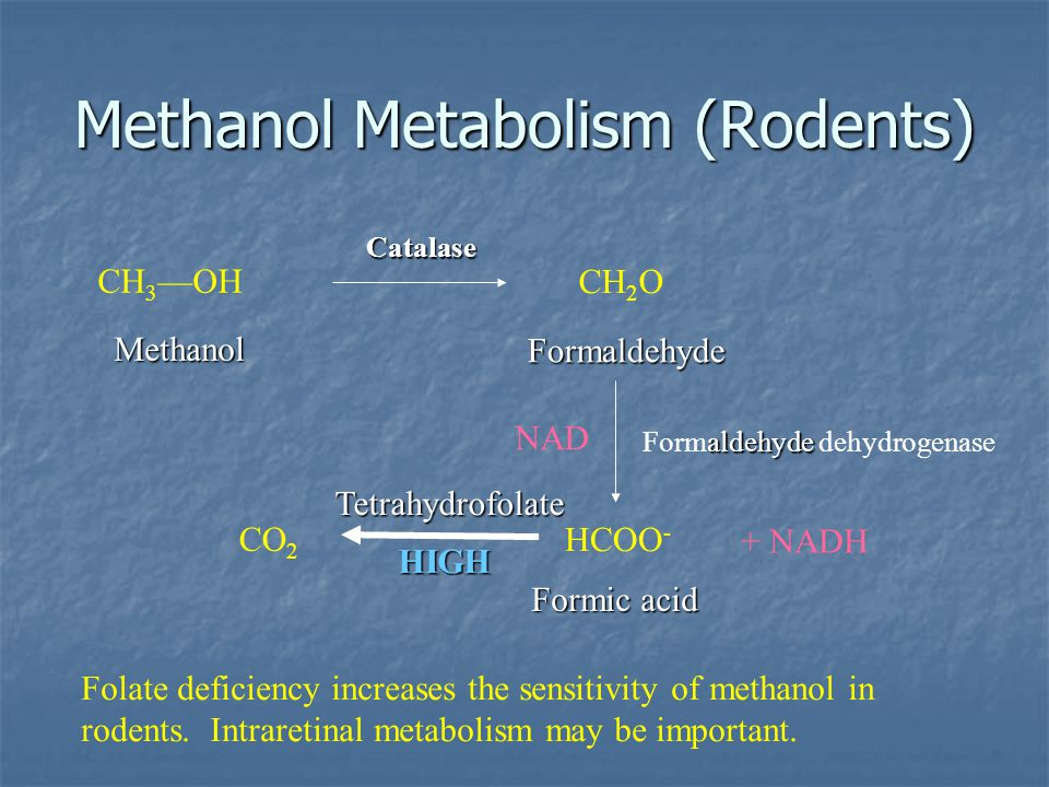 Methanol Metabolism (Rodents)
