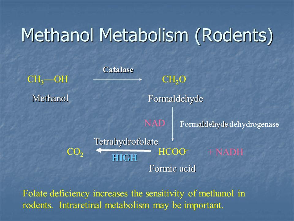 Methanol Metabolism (Rodents)
