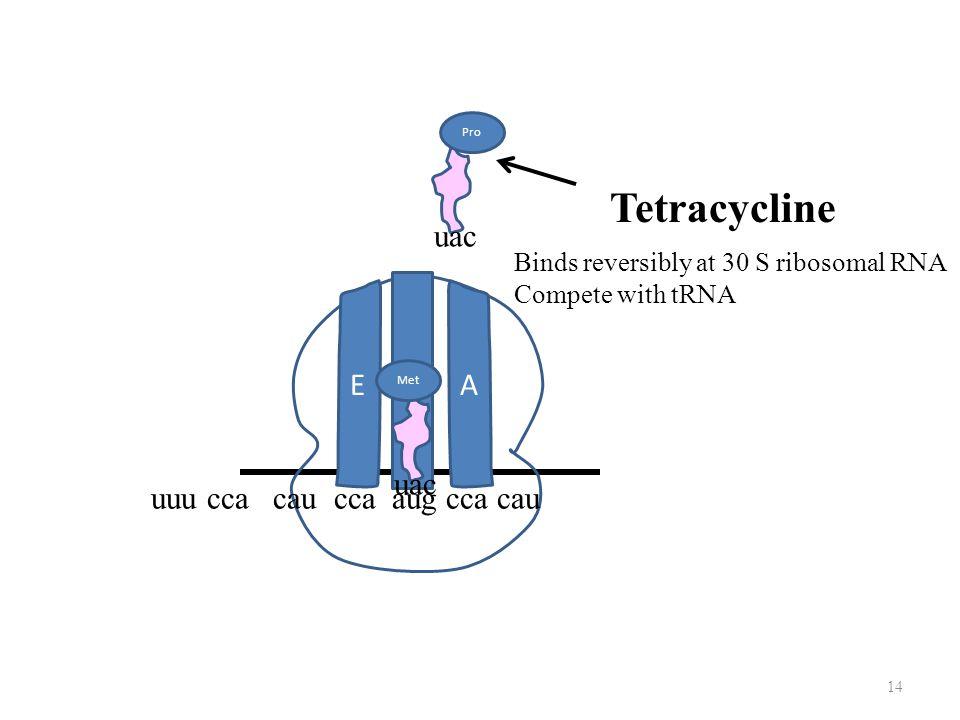 Tetracycline uac P E A uac uuu cca cau cca aug cca cau