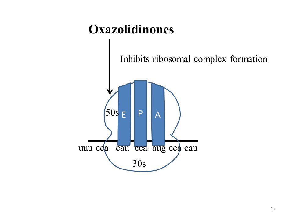 Oxazolidinones Inhibits ribosomal complex formation P E A 50s