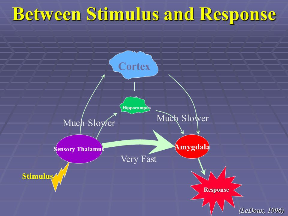 Between Stimulus and Response