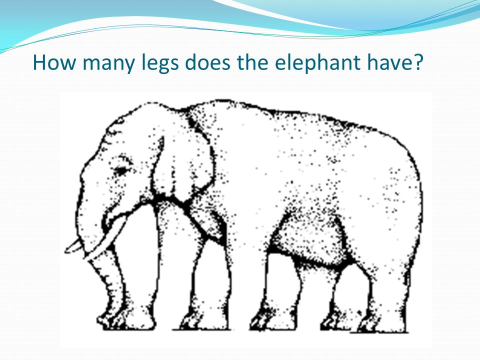 How many legs does the elephant have