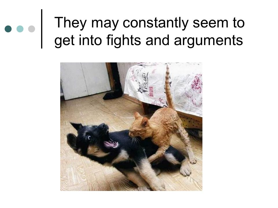 They may constantly seem to get into fights and arguments