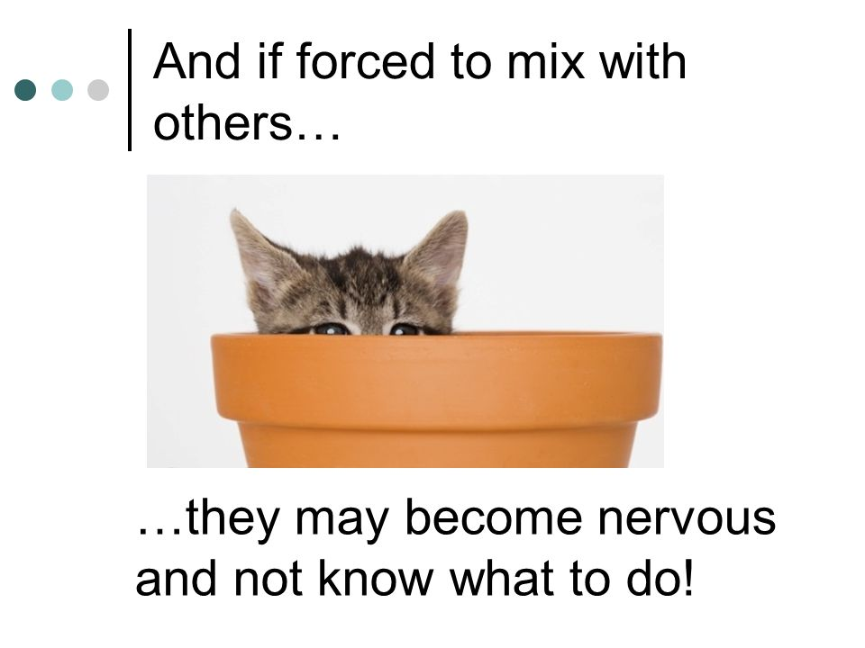 And if forced to mix with others…