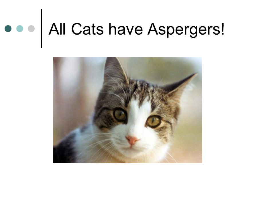 All Cat S Have Aspergers Syndrome