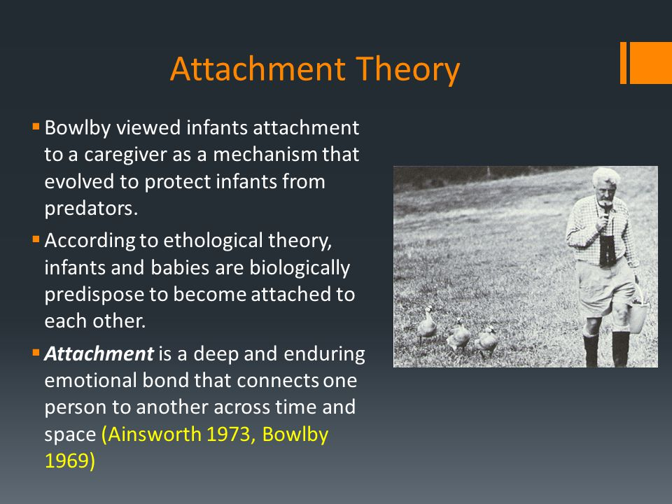 Attachment Theory Bowlby viewed infants attachment to a caregiver as a mechanism that evolved to protect infants from predators.
