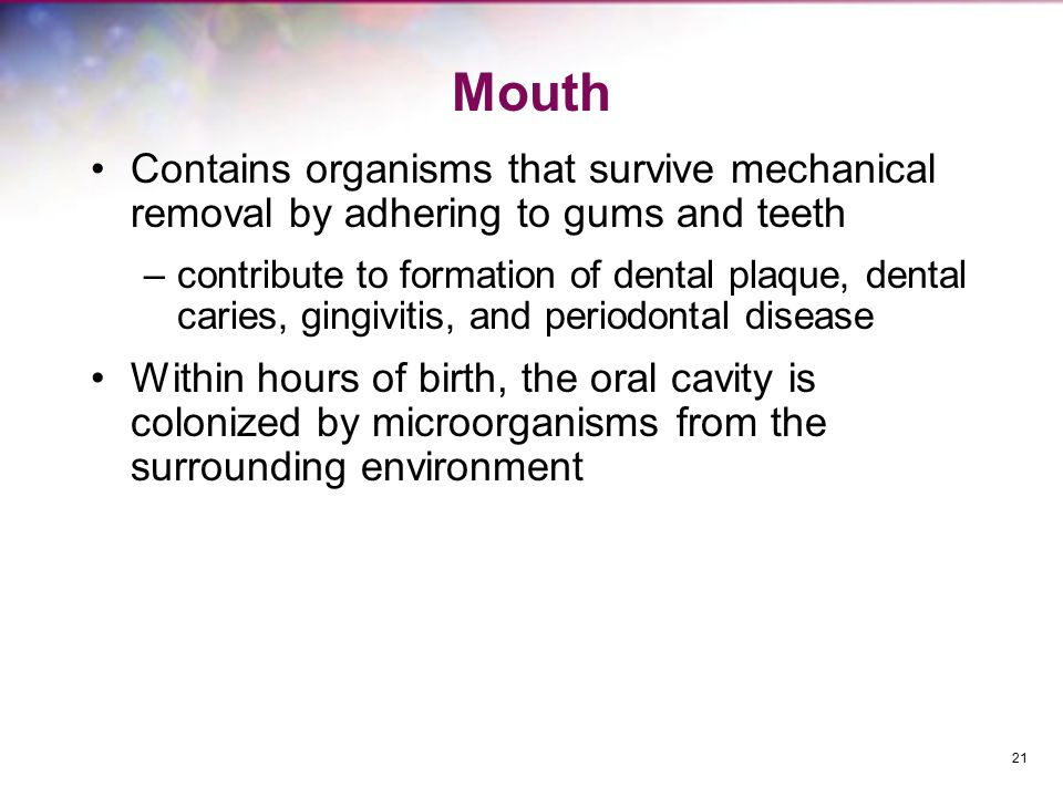 Mouth Contains organisms that survive mechanical removal by adhering to gums and teeth.