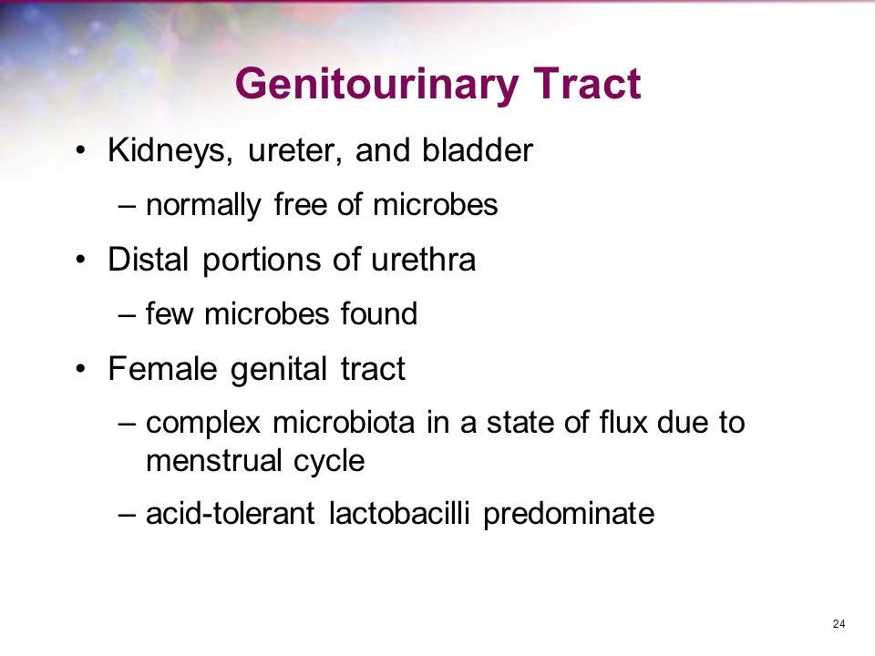Genitourinary Tract Kidneys, ureter, and bladder